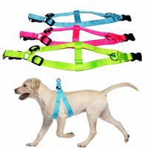 China LED Light Up Dog Harness Night Waterproof Pet Vest OEM ODM Available on sale