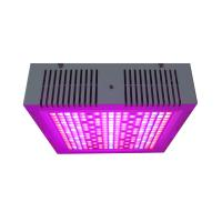 Best Osunby 600W Dimmable LED Grow Lights Full Spectrum for Indoor Greenhouse Plants wholesale