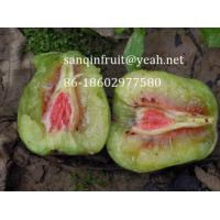 China red kiwi seedlings red kiwi plant grafted kiwi seedlings red pulp kiwi fruit seedlings pulp on sale