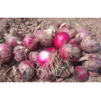 China Red Natural Fresh Onion Anti-Cholesterol For Grilling And Char-Broiling, Flat spherical or spherical on sale