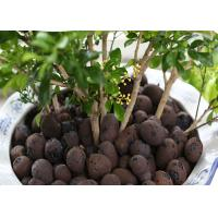 Best Aquaponic Hydroponic Clay Balls Customized Size Low Energy Consumption wholesale