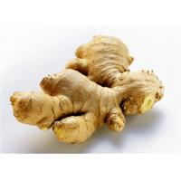 Best 2016 New Fresh China Yellow Color Ginger Export to Chittagong, Bangladesh, Karchi Pakistan wholesale