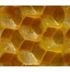 Best Honey Bees Wax wholesale