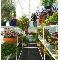Best utility greenhouse staging wholesale