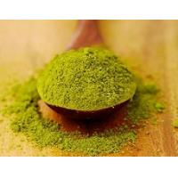 Best Pure Matcha Green Tea Powder Powdered Herbal Extracts For Strengthen Immunity wholesale
