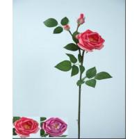 Best Rose With Bud wholesale