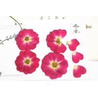 Best Red Rose Real Pressed Flowers Diameter 3 CM For Valentine'S Day Holidays wholesale