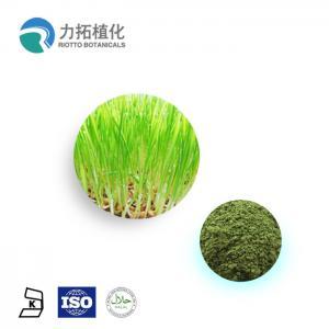 Best 100% Natural Wheat Grass Powder / Organic Plant Protein Powder Keep Health wholesale