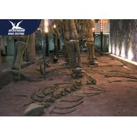 Buy cheap Large Artificial Fiberglass Dinosaur Fossil Realistic Replicas 12 Months from wholesalers