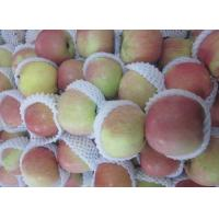 Best 2016 China Natural Apple wholesale