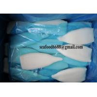 China Frozen seafood iqf Squid Tube Todarodes Pacificus Illex argentinus on sale