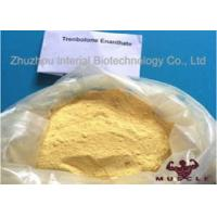 Best Raw Yellow Crystalline Trenbolone Enanthate Powder , Tren E Steroids For Lean Muscle wholesale