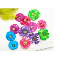 Best Small Daisy Natural Real Pressed Flowers True Plants Specimens For DIY Photo Frame wholesale
