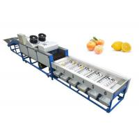China lemon cleaning waxing sorting machine, lemon grading machine, lemon sorter on sale