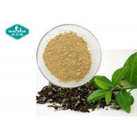 China 98% Polyphenols Natural Botanical Extracts / Dehydrated Green Tea Extract With Antioxidants on sale