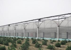 Best Anti Wind Climate Control Lettuces Multi Tunnel Greenhouse wholesale