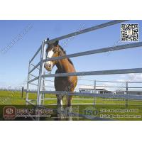 Best 1.8X2.1m Oval Pipe Welding Steel Horse Panels | HESLY China Horse Panel Supplier wholesale