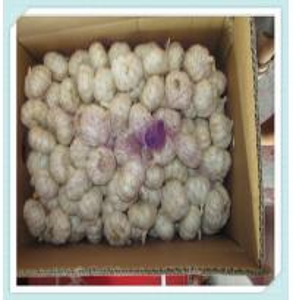 Best Hot Sale New Garlic jining whosales garlic in cold room-garlic 2015 wholesale