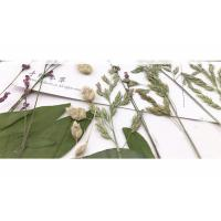 Best Original Wild Grass Weed Large Pressed Flowers For Aroma Wax Candles wholesale