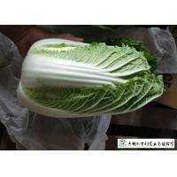 Best Frozen Vegetable Factory Napa Cabbage Plant Can Lower Blood Pressure wholesale