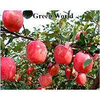 Cheap 2016 New Fresh China Green or Red Color Fuji; Qinguan;Gala Varieties Apple for sale