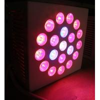 Best High power SMD Red / Blue Led Growing Lights 2400lm with full spectrum for bonsai wholesale
