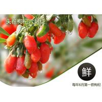 Best Weight Loss Herbal Dried Fruit Pure Goji Berry Wolfberry / Chinese Wolfberr wholesale
