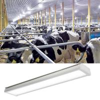Buy cheap Chicken Farm Lighting Led Tri Proof Lamp , Led Vapor Proof Light Fixture Ip65 from wholesalers