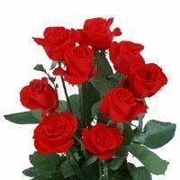 China Fresh Cut Flower (Rose - Calora) on sale