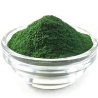 Best Dark Green Plant Extract Powder Spirulina Powder 60% Protein Feed Grade wholesale