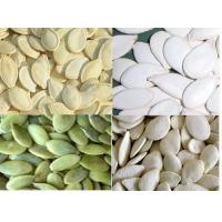 China Pumpkin seed kernels Grown Without shell A on sale