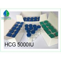 Best Injectable Gonadotropin Human Growth Hormone Peptide HCG 5000iu/ Vial wholesale