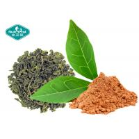 Best Natural Botanical Extracts 98.0% Polyphenols Green Tea Extract with EGCG 98% wholesale