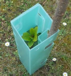 2mm 3mm Corflute Tree Guard / Vine Guard / Tree Shelter