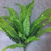 Buy cheap Mini plant with more than 50 leaf shapes from wholesalers