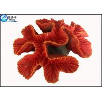 Buy cheap Fake Coral Natural Aquarium Decorations Fish Tank Background with Silicone and from wholesalers