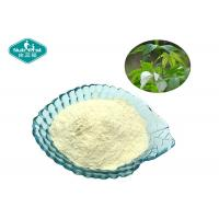 China Sweet Tea Extract 70% Rubusoside 100% Natural Sweetener with Low Calorie on sale