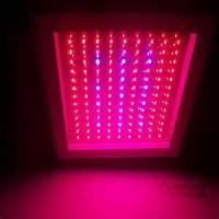 Best 360w / AC85 - 264V high power indoor hydroponic Led grow lights 491 x 321 x 70 mm wholesale