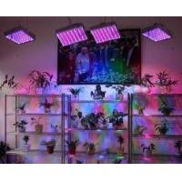 Best LED Panel indoor growing Light 45W also 50W, 90W, 120W ,300W ,600W or Customized Available wholesale