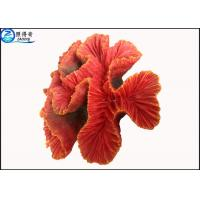Best Fake Coral Natural Aquarium Decorations Fish Tank Background with Silicone and Polyresin wholesale
