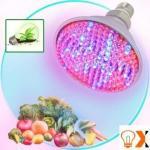 Best 10W PAR38 LED Grow Light (HK-PAR38-001) wholesale