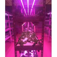 Cheap Full Spectrum T8 LED Grow Tube With Zigbee Dimming System Local Control and for sale
