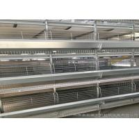 Best Hot Galvanized Automatic Egg Collection System Strong Frame 3 Years Guarantee wholesale