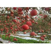 Best New Crop China Fresh Natural Red and Green Color Apple Fuji Variety wholesale