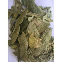 China Guava Leaf,Immature fruit of Guava,Immature fruit of Common Guava on sale
