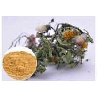 Best Lower Blood Pressure Herbal Plant Extract Flavones Dandelion Root Extract Powder wholesale