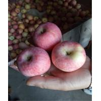 2016 New Crop and Harvest Chinese Fresh Red or Green Color Red Star Variety