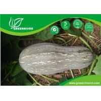 China Yellow organnic Chinese pumpkin seeds ISO9001-2000 Certificate on sale