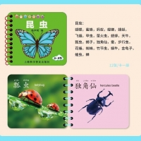 Best 2 Year Olds 0.32mm Plastic Educational Flash Cards Cmyk Printing wholesale