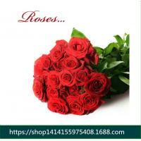 China Fresh cut Flowers red rose for flower shop Wholesale Roses Flowers Corola from flower base good quality to flower gifts on sale